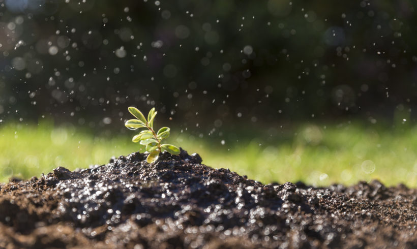 Día del medioambiente: Un llamado de atención anual
